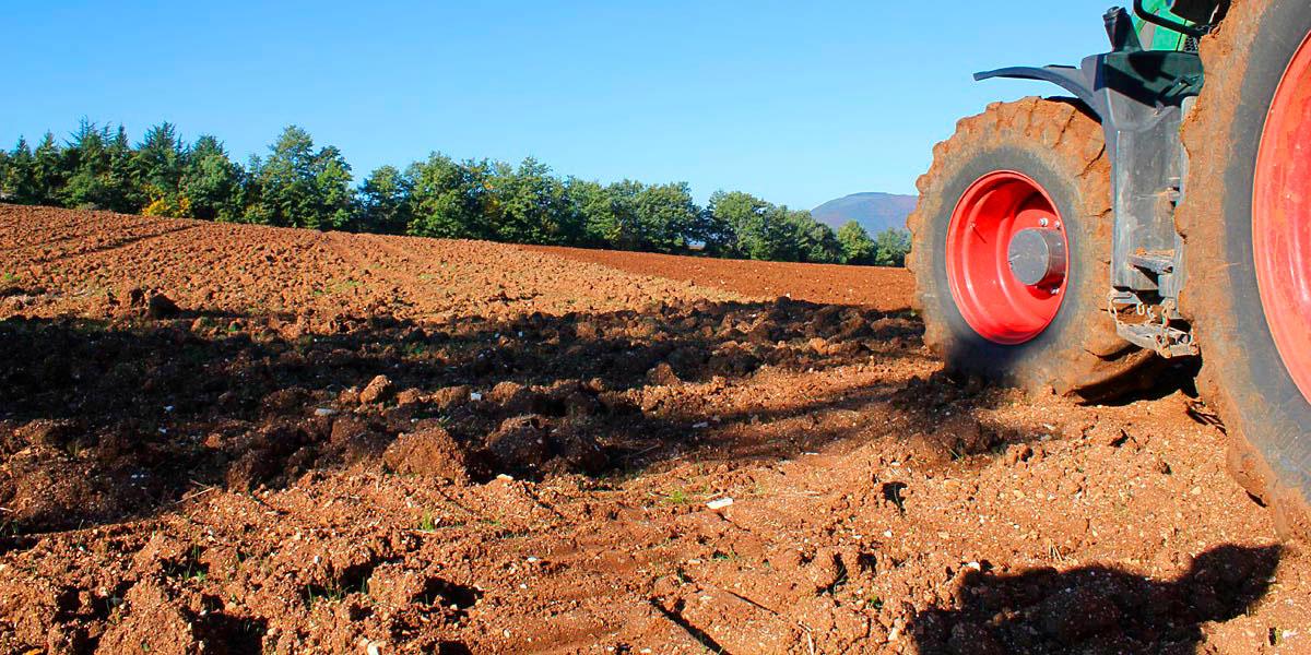 azienda-agricola-piconi-05_slide